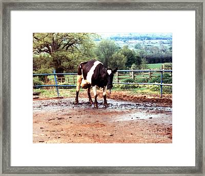 Mad Cow Disease Framed Print by Science Source