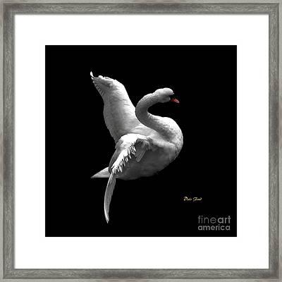 Majestic Swan 2 Framed Print