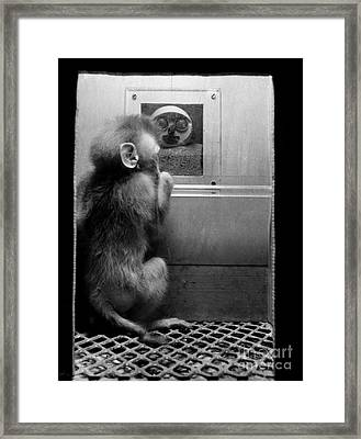 Maternal Deprivation Research Framed Print by Science Source