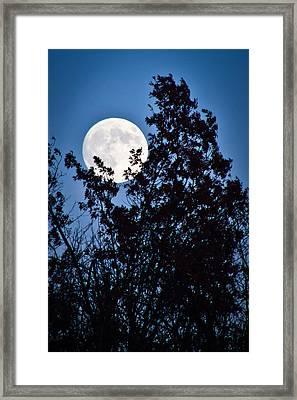 Moon Night Framed Print by Jiayin Ma