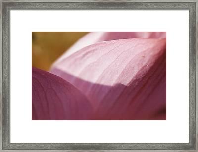 Nelumbo 'red Scarf' Framed Print