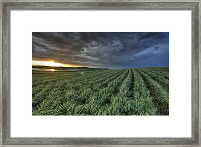 Newly Planted Crop Framed Print by Mark Duffy