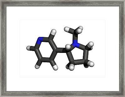 Nicotine Molecule Framed Print by Friedrich Saurer