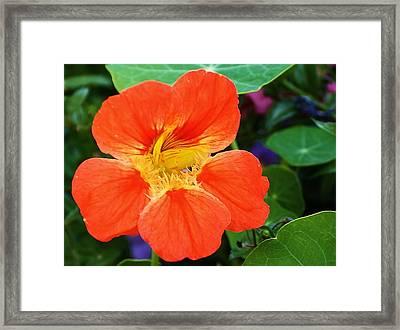 Orange Delight Framed Print by Bruce Bley