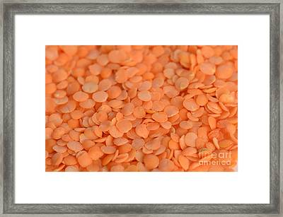 Orange Lentils Framed Print by Photo Researchers, Inc.