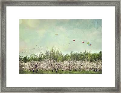 Orchard Of Apple Blossoming Tees Framed Print