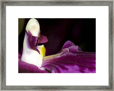 Orchid Flower Bloom Framed Print
