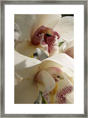 Orchids Framed Print by Tina McKay-Brown