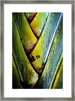 Palm Leaves Framed Print by Frank DiGiovanni