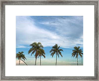 Palm Trees Framed Print by Blink Images