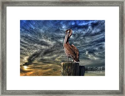 Framed Print featuring the photograph Pelican At Sunset by Dan Friend