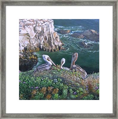 Pelican Point Framed Print by Lorna Saiki