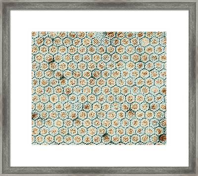 Polio Viruses, Tem Framed Print by Dr Klaus Boller
