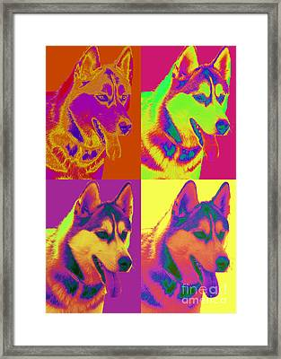 Pop Art Siberian Husky Framed Print by Renae Laughner