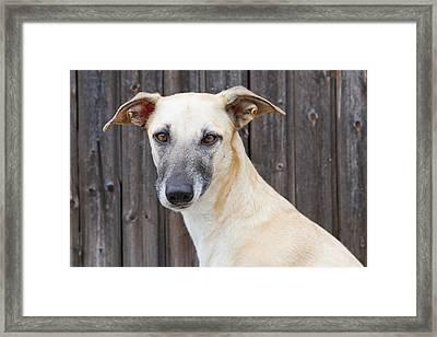Portrait Of Dog Framed Print