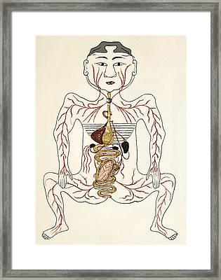 Pregnancy Anatomy, 15th Century Artwork Framed Print by Sheila Terry