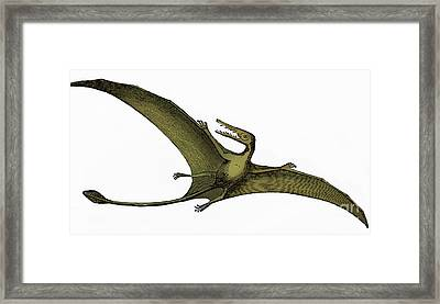 Pterodactyl Extinct Flying Reptile Framed Print by Science Source