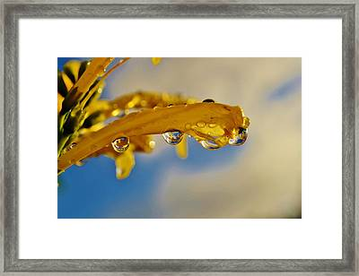 Framed Print featuring the photograph Raindrops On Blossom by Werner Lehmann
