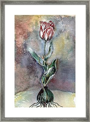 Red Tulip Framed Print by Mindy Newman