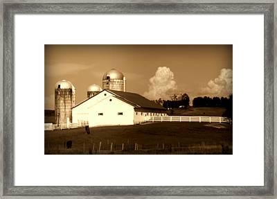 Cattle Farm Mornings Framed Print
