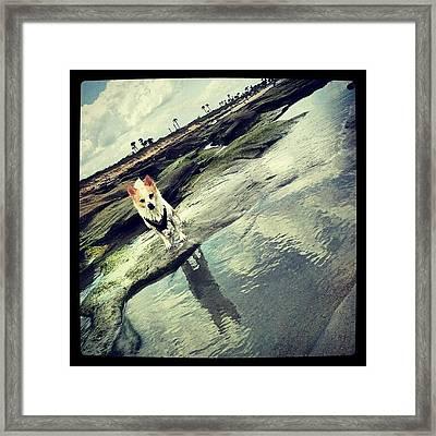 Rocko Framed Print