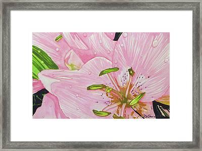 Rosita  Framed Print by Debi Singer