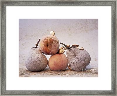 Rotten Pears And Apple. Framed Print by Bernard Jaubert