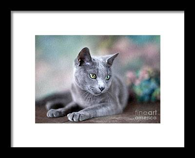 Beautiful Cats Framed Prints