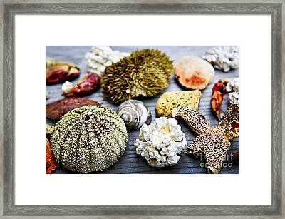 Sea Treasures Framed Print