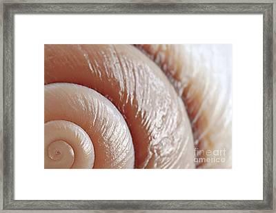 Seashell Surface Framed Print by Elena Elisseeva