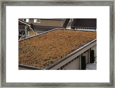 Sedum Green Roof Framed Print