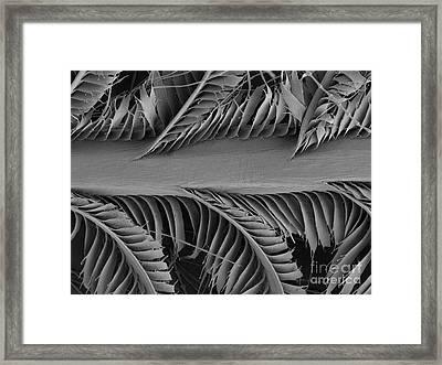 Sem Of Eastern Bluebird Feathers Framed Print by Ted Kinsman