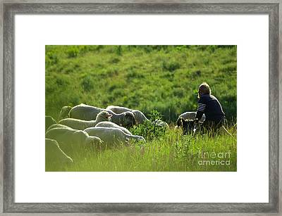 Shepherd Framed Print by Odon Czintos