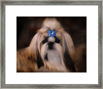 Shih Tzu Framed Print by Jai Johnson