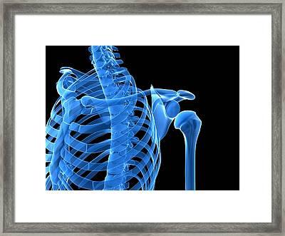 Shoulder Bones, Artwork Framed Print by Sciepro