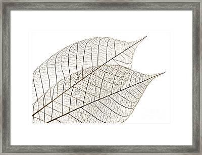 Skeleton Leaves Framed Print by Elena Elisseeva