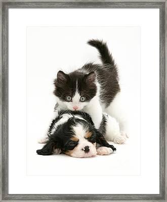 Sleeping Puppy Framed Print by Jane Burton