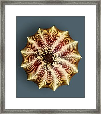 Small White Butterfly Egg, Sem Framed Print by Dr Jeremy Burgess