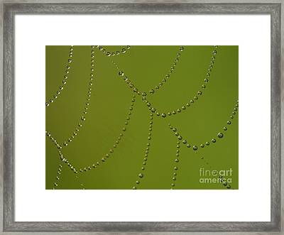 Spiderweb Framed Print by Odon Czintos