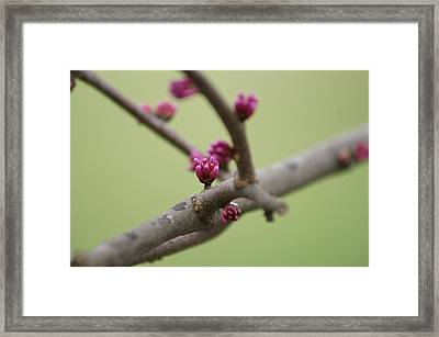 Spring Framed Print by Heidi Poulin