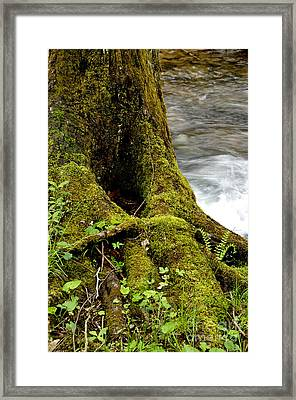 Spring Monongahela National Forest Framed Print by Thomas R Fletcher