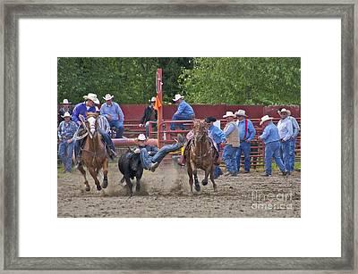 Steer Wrestler Framed Print by Sean Griffin