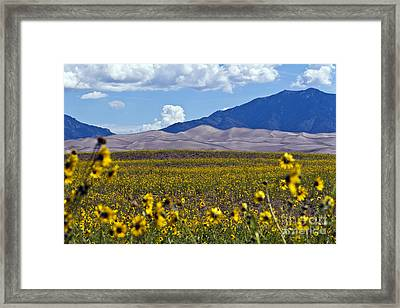 Sunflowers Sand N Sky Framed Print by Scotts Scapes