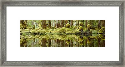 Swamp Framed Print by David Nunuk