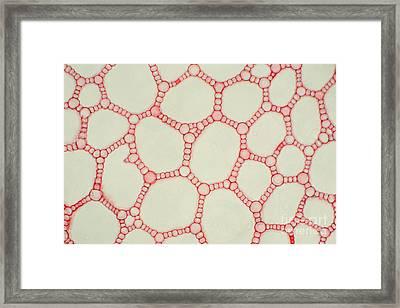 Sweet Flag Stem Framed Print by Ted Kinsman