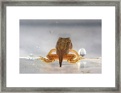 Tadpole Framed Print