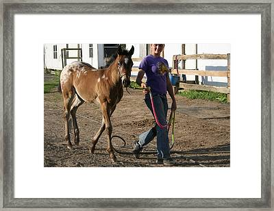 The Beauty Of The Horses Framed Print by Valia Bradshaw