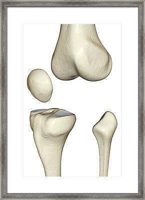 The Bones Of The Knee Framed Print
