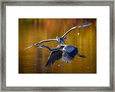The Chase Framed Print by Brian Stevens