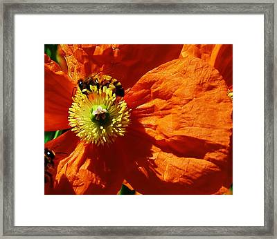 The Gathering Framed Print by Bruce Bley